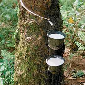 Where does rubber come from?