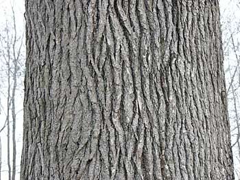 Why do tree's have bark?